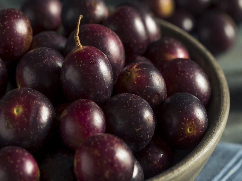 Muscadine Grape Juice Benefits