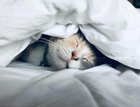 night sleep